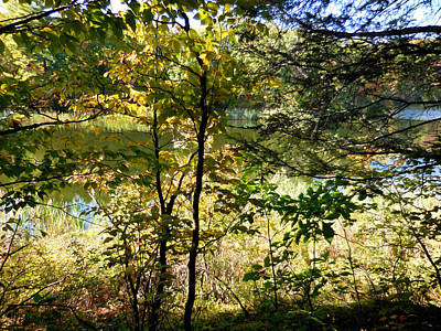 Lake View Through Autumn Tree 11 Poster by Lanjee Chee