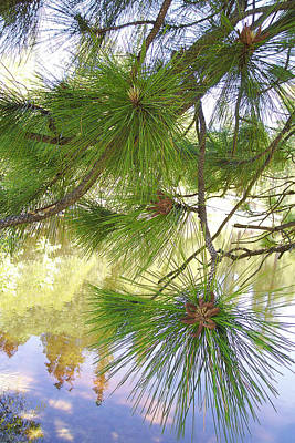Lake View With Ponderosa Pine Poster