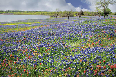 Poster featuring the photograph Lakeside Texas Bluebonnets by David and Carol Kelly
