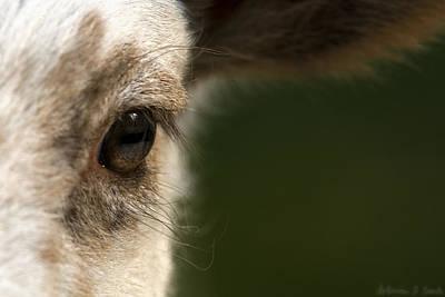 Lamb Eyelashes Poster by Warren Sarle