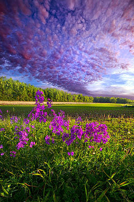 L'amore De Ma Vie Poster by Phil Koch