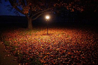 Poster featuring the photograph Lamp-lit Leaves by Lars Lentz
