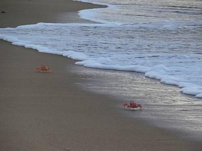 Lamu Island - Crabs Playing At Sunset 4 Poster by Exploramum Exploramum