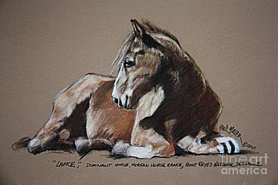Lance Dominate Horse At Morgan Horse Ranch Of Point Reyes National Seashore Poster