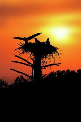 Landing On Nest For The Evening Poster