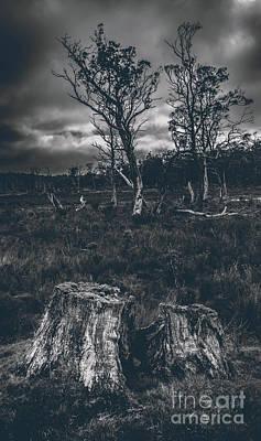 Landscape Of A Dark Creepy Australian Woodland  Poster by Jorgo Photography - Wall Art Gallery