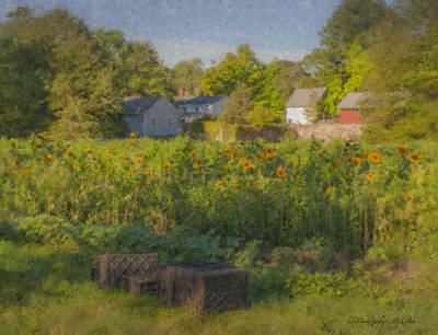 Langwater Farm Sunflowers And Barns Poster by Bill McEntee