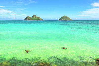 Lanikai Beach Two Sea Turtles And Two Mokes Poster