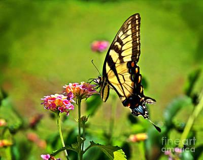 Lantana Monarch Poster by Jeff McJunkin