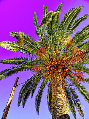 Blue Sky And Palm Tree Poster