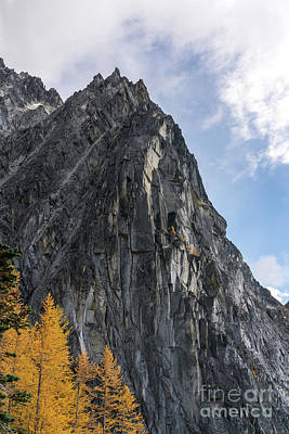 Larches And Granite Poster by Mike Reid
