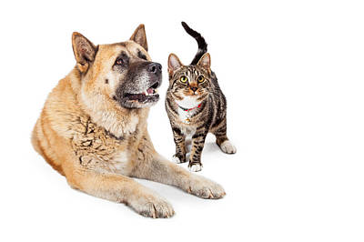Large Dog And Cat Looking Up Together Poster