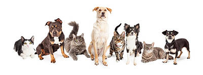 Large Group Of Cats And Dogs Together Poster