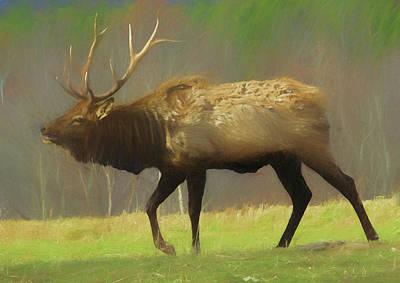Large Pennsylvania Bull Elk. Poster
