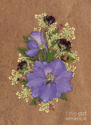 Larkspur And Queen-ann's-lace Pressed Flower Arrangement Poster