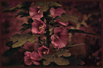 Poster featuring the photograph Last Hollyhock Blooms by Douglas MooreZart