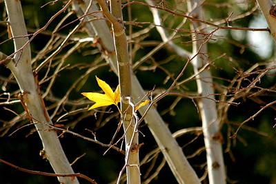 Last Leaf Poster by Kume Bryant