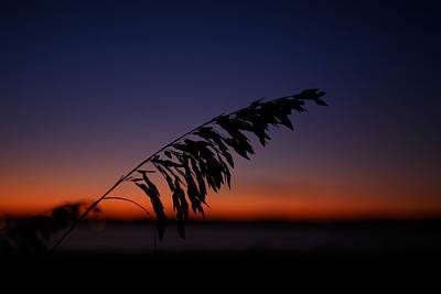 last light at Hilton Head Island Poster by Shane Holsclaw