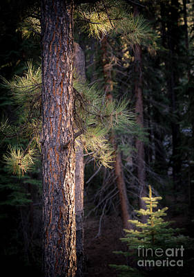 Poster featuring the photograph Last Light by The Forests Edge Photography - Diane Sandoval