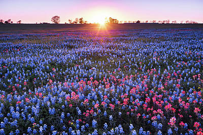 Last Sunlight Of The Day In Wildflower Field - Texas Poster