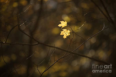 Late Autumn Light Poster by Diane Diederich