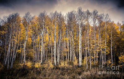 Poster featuring the photograph Late Fall by The Forests Edge Photography - Diane Sandoval
