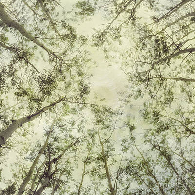 Late Summer Tree Tops Poster