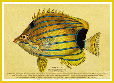 Lauhau - Bluestripe Butterflyfish Poster by James Temple