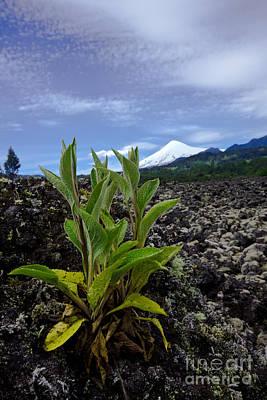 Lava And Villa Rica Volcano Poster by Dant� Fenolio