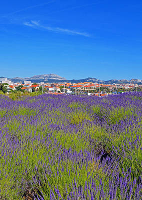 Lavendar Of Provence Poster by Corinne Rhode