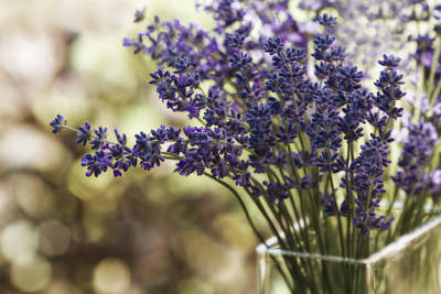 Lavender Bokeh Poster by Rebecca Cozart