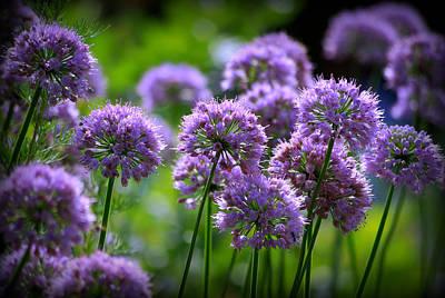 Lavender Breeze Poster by Linda Mishler