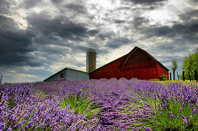 Lavender Field Poster by Russell Todd