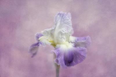 Lavender In The Garden Poster by Kim Hojnacki