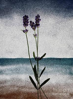 Lavender Ocean Breath Poster