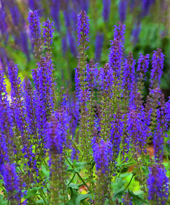 Poster featuring the digital art Lavender Patch by Chris Flees