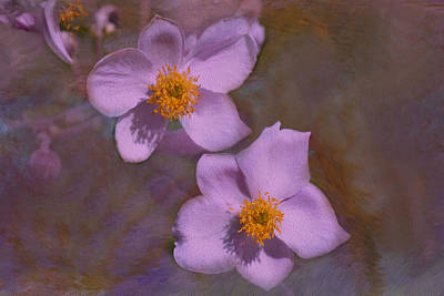 Lavender Petals Poster by Lena Photo Art
