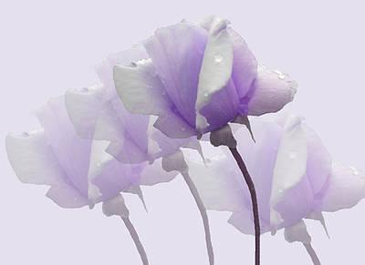 Lavender Roses  Poster