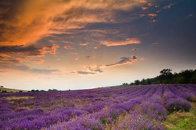 Lavender Sunset Poster by Evgeni Dinev