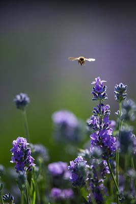 Lavender User Poster