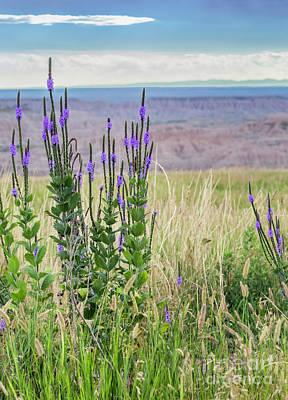Lavender Verbena And Hills Poster