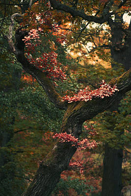 Layered Autumn Poster by Sandra Rugina