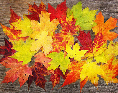 Layered In Leaves Poster by Kathi Mirto