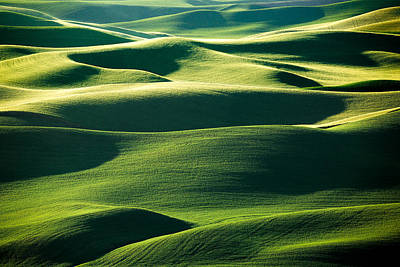 Layers Of Green Poster by Todd Klassy