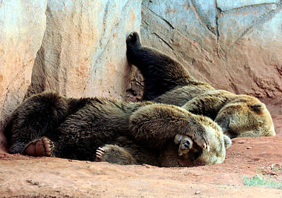 Poster featuring the photograph Lazy Bears by Sheila Brown