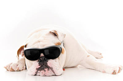 Lazy But Cool Dog Poster