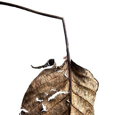 Leaf Poster by Bernard Jaubert