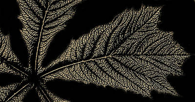 Leaf Detail Poster by Martin Newman