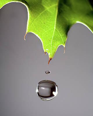 Leaf Drip Poster