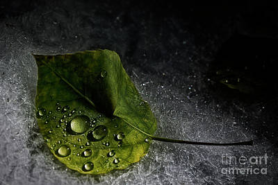 Leaf Droplets Poster